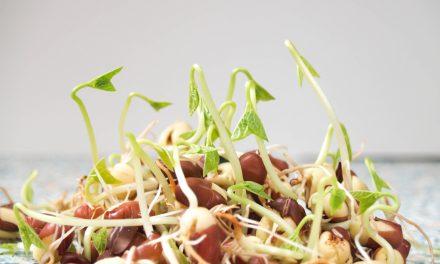 Nejčerstvější zelenina – co a jak lze doma nechat klíčit